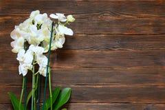 Witte orchideeën op een donkere houten achtergrond met lege ruimte voor t Stock Foto's