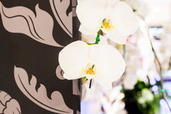Witte orchideeëndecoratie naast bruin florabehang bij openlucht Stock Foto's