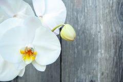 Witte orchidee royalty-vrije stock foto's