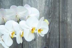 Witte orchidee royalty-vrije stock afbeelding