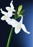 Witte orchidee stock illustratie