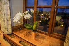 Witte orchidee in een pot - flora royalty-vrije stock foto's