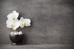 Witte orchidee en kuuroordstenen op de grijze achtergrond stock afbeelding