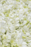 Witte orchidee in health spa Stock Afbeelding