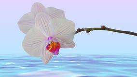 Witte orchidee hierboven - waterachtergrond Stock Fotografie