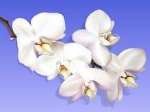 Witte orchidee op een violette achtergrond Stock Fotografie