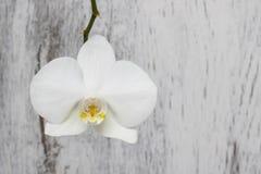 Witte orchidee op witte houten achtergrond royalty-vrije stock afbeeldingen