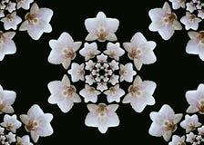 Witte orchideebloei Naadloos beeld royalty-vrije stock afbeeldingen