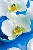 Witte orchideeën Royalty-vrije Stock Foto's