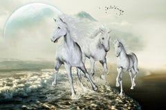 Witte Paarden op het Strand Stock Afbeelding