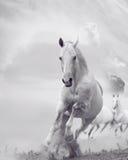 Witte paarden in stof Royalty-vrije Stock Afbeelding