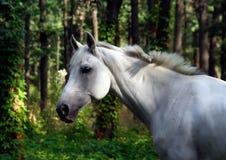 witte paardgangen royalty-vrije stock afbeeldingen