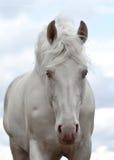 witte paardgangen stock foto