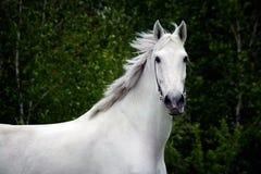 Witte paardlooppas stock afbeelding