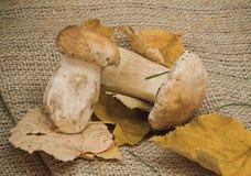 Witte paddestoel met gele droge bladeren Royalty-vrije Stock Fotografie