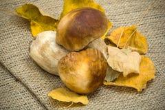 Witte paddestoel met gele droge bladeren Stock Foto