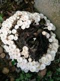 Witte paddestoelen Royalty-vrije Stock Fotografie