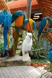 Witte papegaai in de tropische tuin van Nong Nooch Royalty-vrije Stock Foto's