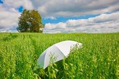 Witte paraplu Stock Afbeeldingen