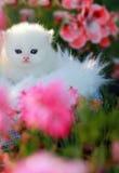 Witte Perzische katjes Royalty-vrije Stock Afbeeldingen