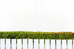 Witte piketomheining en groene bladerenmuur op witte houten muur Stock Afbeeldingen