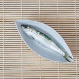 Witte plaat met één sardine Royalty-vrije Stock Fotografie
