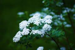 Witte plante royalty-vrije stock afbeelding