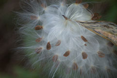 Witte pluis royalty-vrije stock foto's