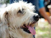 Witte pluizige hond op straat stock fotografie
