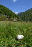 Witte pluizige konijnslaap onder de zon in een hoge weide van de graslente royalty-vrije stock foto
