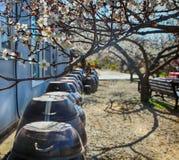 Witte Plum Blooming in het Dorp van Wondong Maehwa, Yangsan, Zuid-Korea, Azië royalty-vrije stock afbeeldingen