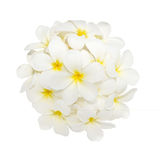 Witte plumeriabloem die op witte achtergrond wordt verfraaid Royalty-vrije Stock Afbeelding