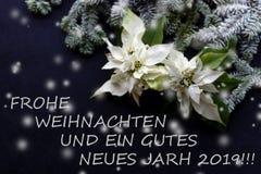 Witte Poinsettiabloem met spar en sneeuw op darkbackground Groetenkerstkaart prentbriefkaar christmastime Rode Wit en royalty-vrije stock afbeelding