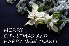 Witte poinsettiabloem met spar op donkere achtergrond Groetenkerstkaart Elegante prentbriefkaar christmastime stock fotografie