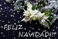 Witte poinsettiabloem met spar op donkere achtergrond Kerstman Klaus, hemel, vorst, zak christmastime Elegante prentbriefkaar royalty-vrije stock afbeelding