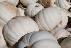 Witte Pompoenen Royalty-vrije Stock Afbeeldingen