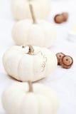 Witte Pompoenen en Eikels Royalty-vrije Stock Afbeeldingen