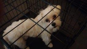 Witte puppyhond stock foto