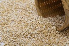 Witte quinoa Royalty-vrije Stock Afbeeldingen