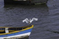 Witte reiger die in een kleine boot landen royalty-vrije stock afbeelding