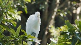 Witte Reigervogel