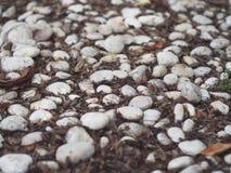 Witte rots Stock Fotografie