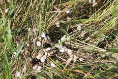 Witte rots in de Krim Royalty-vrije Stock Fotografie