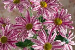 Witte roze bloemen Royalty-vrije Stock Afbeeldingen