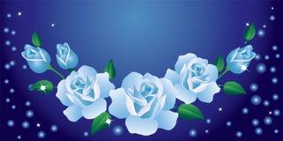 Witte rozen. Stock Foto's