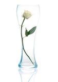 Witte rozen Stock Fotografie