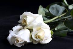 witte rozen Stock Foto