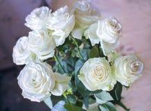 Witte rozen Royalty-vrije Stock Foto