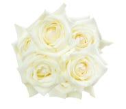 Witte rozen die op de witte achtergrond worden geïsoleerde Royalty-vrije Stock Afbeelding