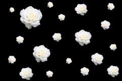 Witte rozen op zwarte Stock Afbeelding